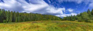 Meadow-with-Wildflowers-300x102.jpg