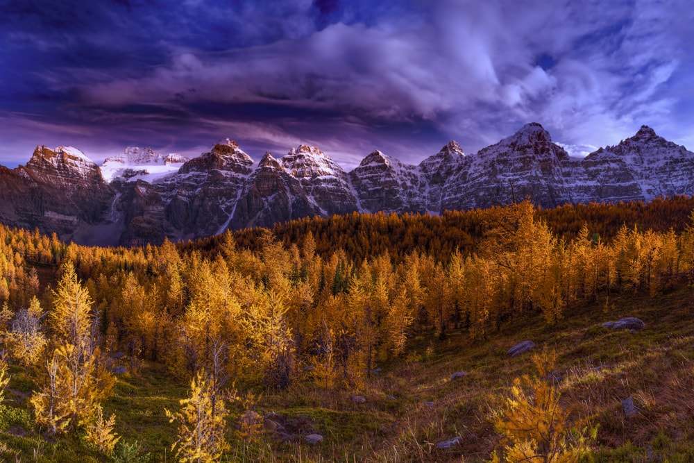 Larch Valley – Looming Clouds
